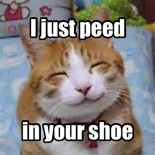 shoes,pee,smug,Cats