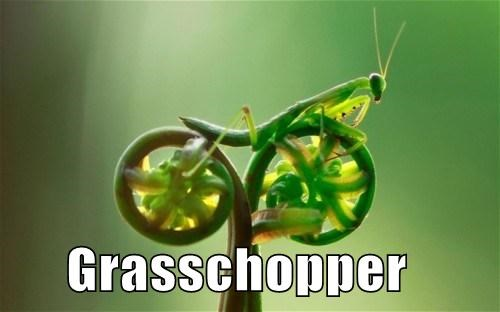 pun grasshopper chopper motorcycle - 7781365248