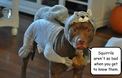 disguise,dogs,squirrels,costume