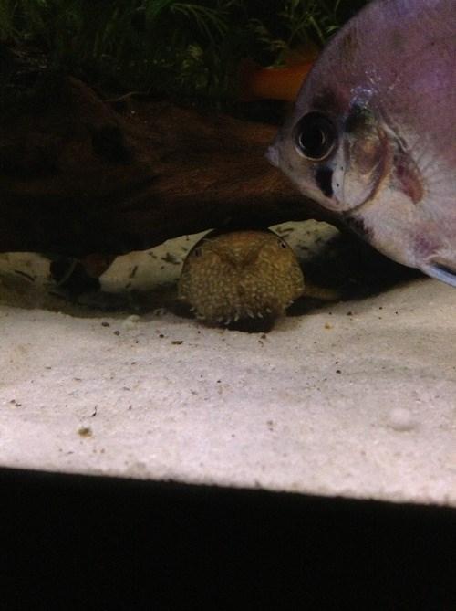 photobomb fish funny - 7782254848