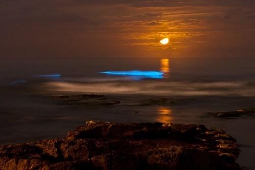 bioluminescent awesome algae science - 7782381056