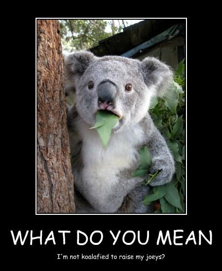 pun koala Joey funny - 7782605312
