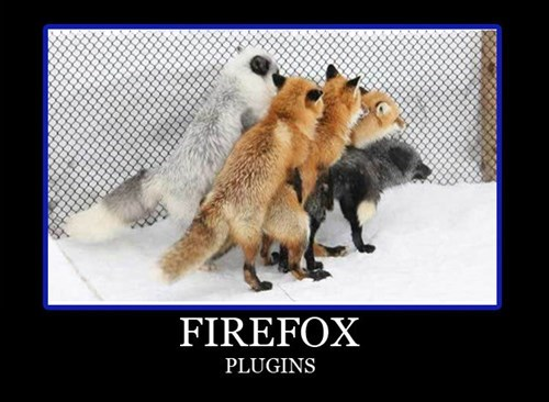 foxes wtf firefox sexy times animals - 7782806272