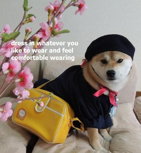 fashion,doge,poorly dressed,g rated,shibe
