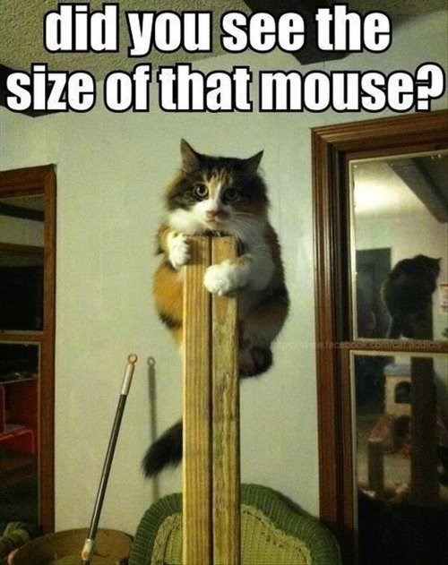 mouse - 7785122560