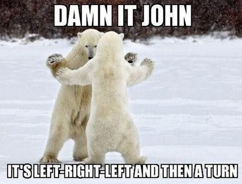 dancing,polar bears