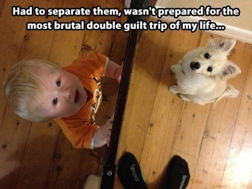 baby guilt trip - 7785132288