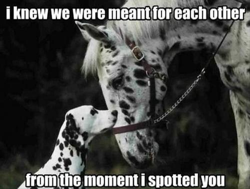 dalmatian pun dogs horse spots - 7785147392
