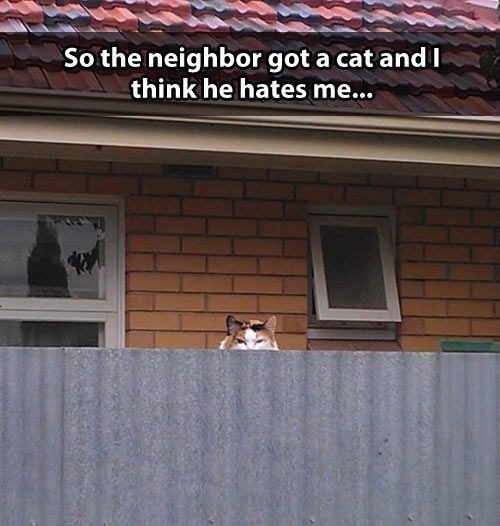 neighbors Cats - 7785150720