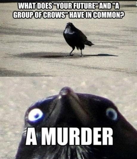 murder crows pun future