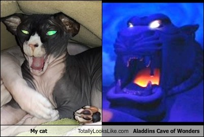 cave of wonders,eyes,totally looks like,aladdin,Cats,funny