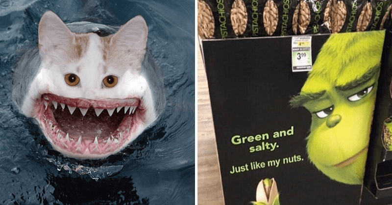Funny cursed images, animals, creepy, photoshops | scary shark cat merged together | Green and salty. Just like my nuts. PISTACHIOS PISTACHIOS The Grinch