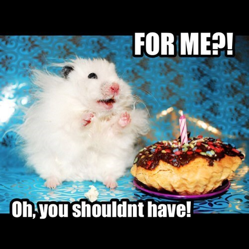 cake birthday Fluffy cute surprise hamster - 7786317824