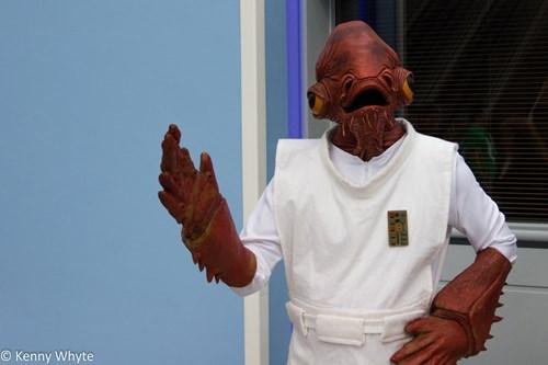 cosplay,star wars,admiral ackbar
