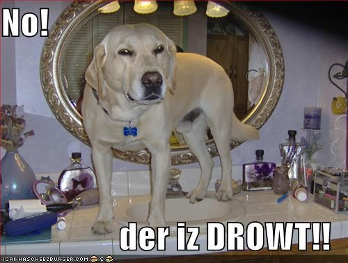 Cheezburger Image 778703104