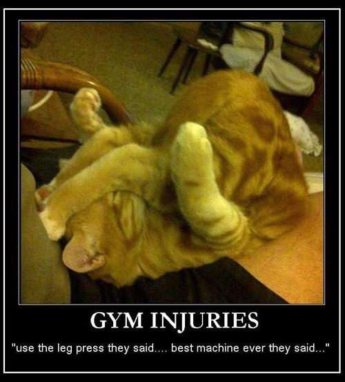 cat lift funny stretch - 7788152576