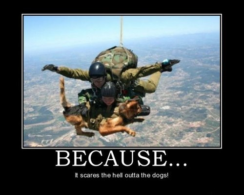 scary dogs parachuting funny