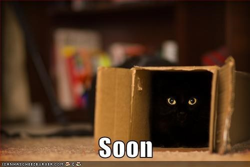 cat box waiting sneaky - 7789925632