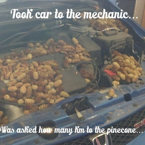 cars pine cones funny there I fixed it