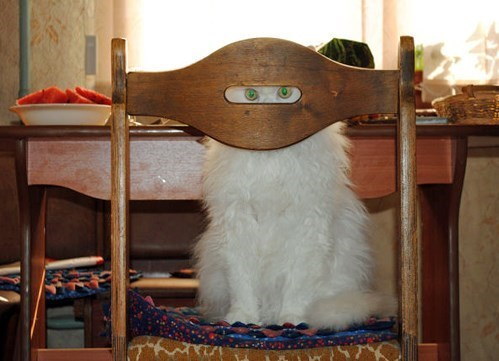 chair,cat
