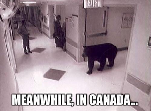 Canada,hospital,bear
