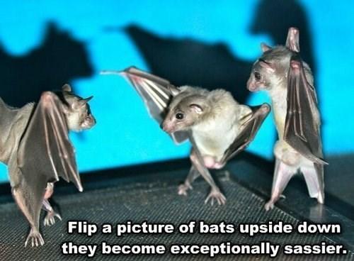 bats,sassy