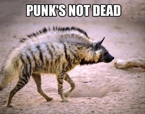 punk - 7790359296