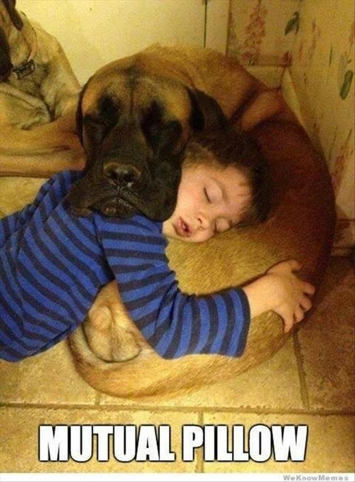 Pillow,child,nap,dogs