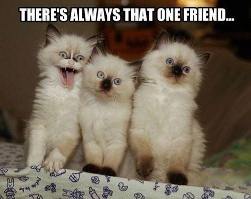kitten friends - 7790384896