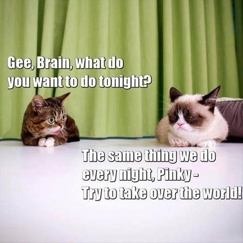Lil BUB and Tardar Sauce as Pinky & the Brain