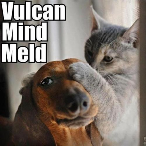 Vulcans,dogs,mind meld,Star Trek,Cats