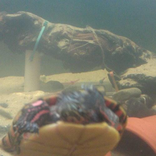 photobomb turtles funny - 7790440448