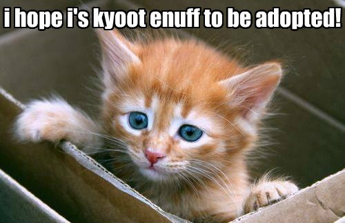 i hope i's kyoot enuff to be adopted!