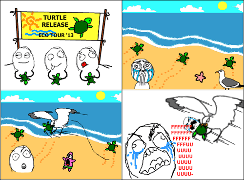 nature,turtles,seagulls,the beach