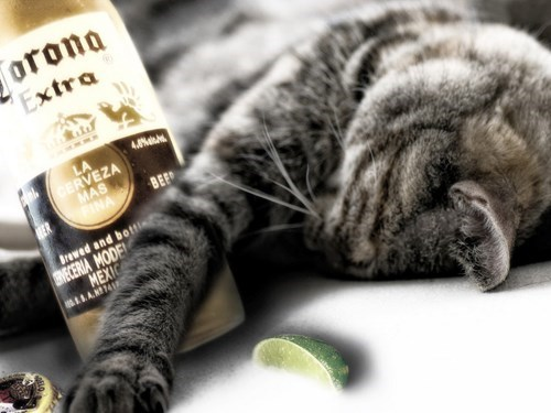 beer crunk critters Cats funny - 7790824704