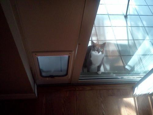 door,cat
