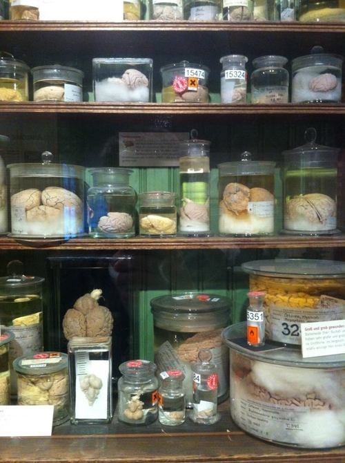brains jars science funny - 7791002112