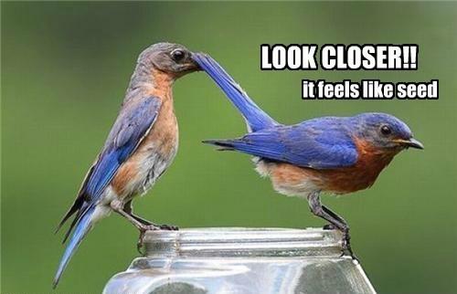 LOOK CLOSER!! it feels like seed