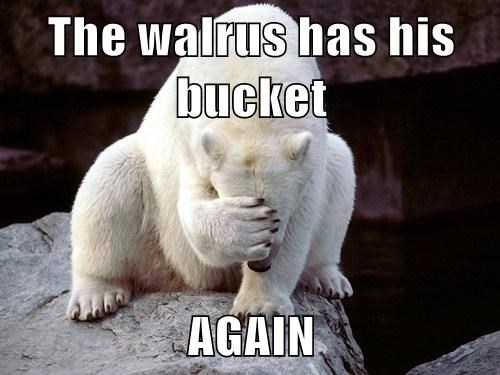 The walrus has his bucket  AGAIN