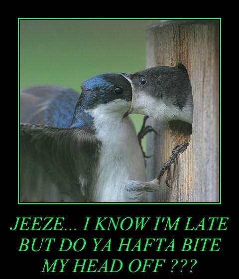 work bite bird late funny - 7791815680