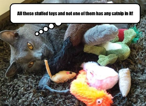 All these stuffed toys and not one of them has any catnip in it!