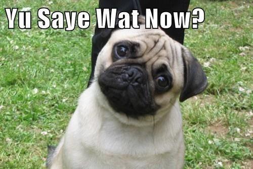 pug cute thinking dogs - 7792301824