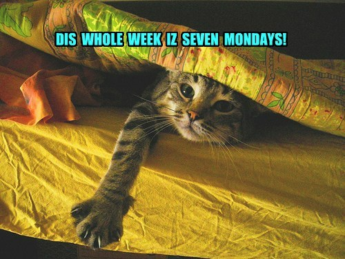 cat tired cute mondays - 7792512512