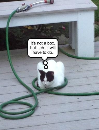 cat wet sleeping hose - 7792526336