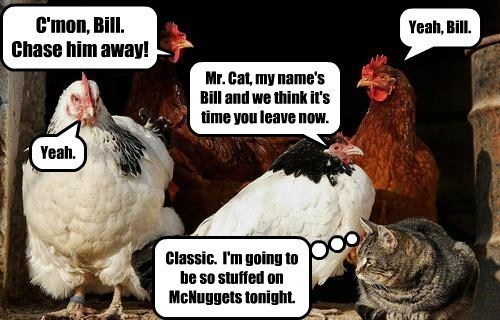 C'mon, Bill. Chase him away! Yeah, Bill. Mr. Cat, my name's Bill and we think it's time you leave now. Yeah. Classic. I'm going to be so stuffed on McNuggets tonight.