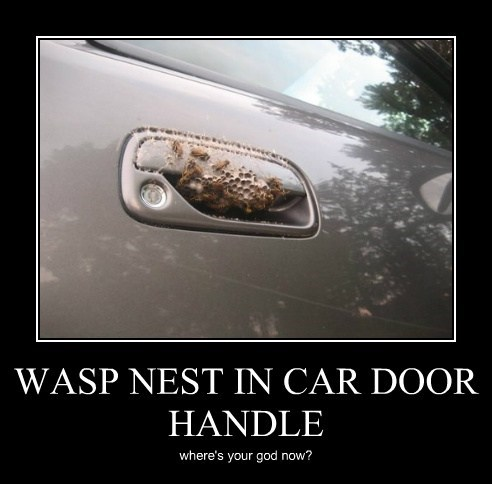 wasps,nest,car door