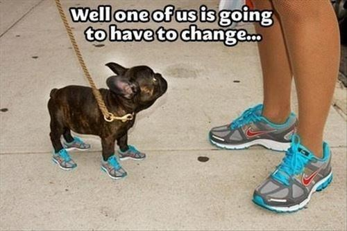 shoes matching dogs