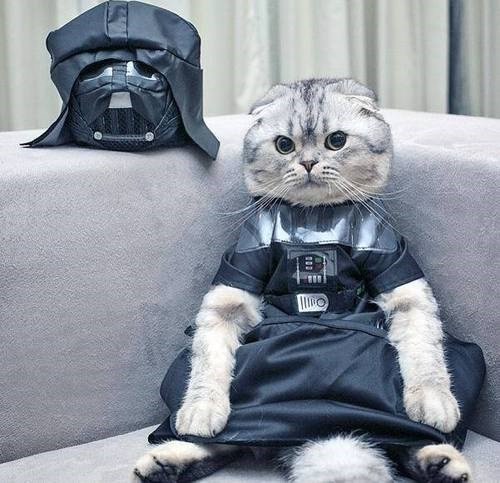 cat cosplay star wars darth vader
