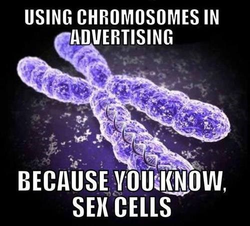 cells chromosomes science sexy times funny - 7795457792