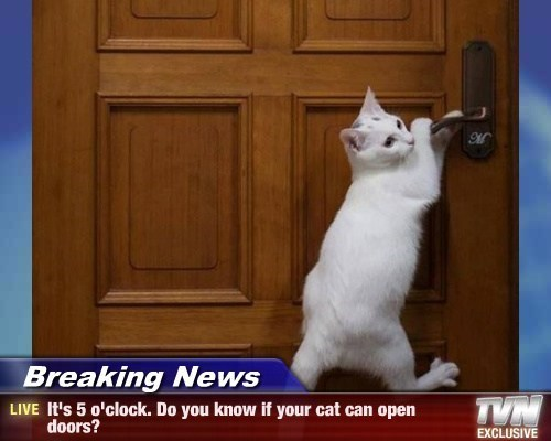 Breaking News - It's 5 o'clock. Do you know if your cat can open doors?